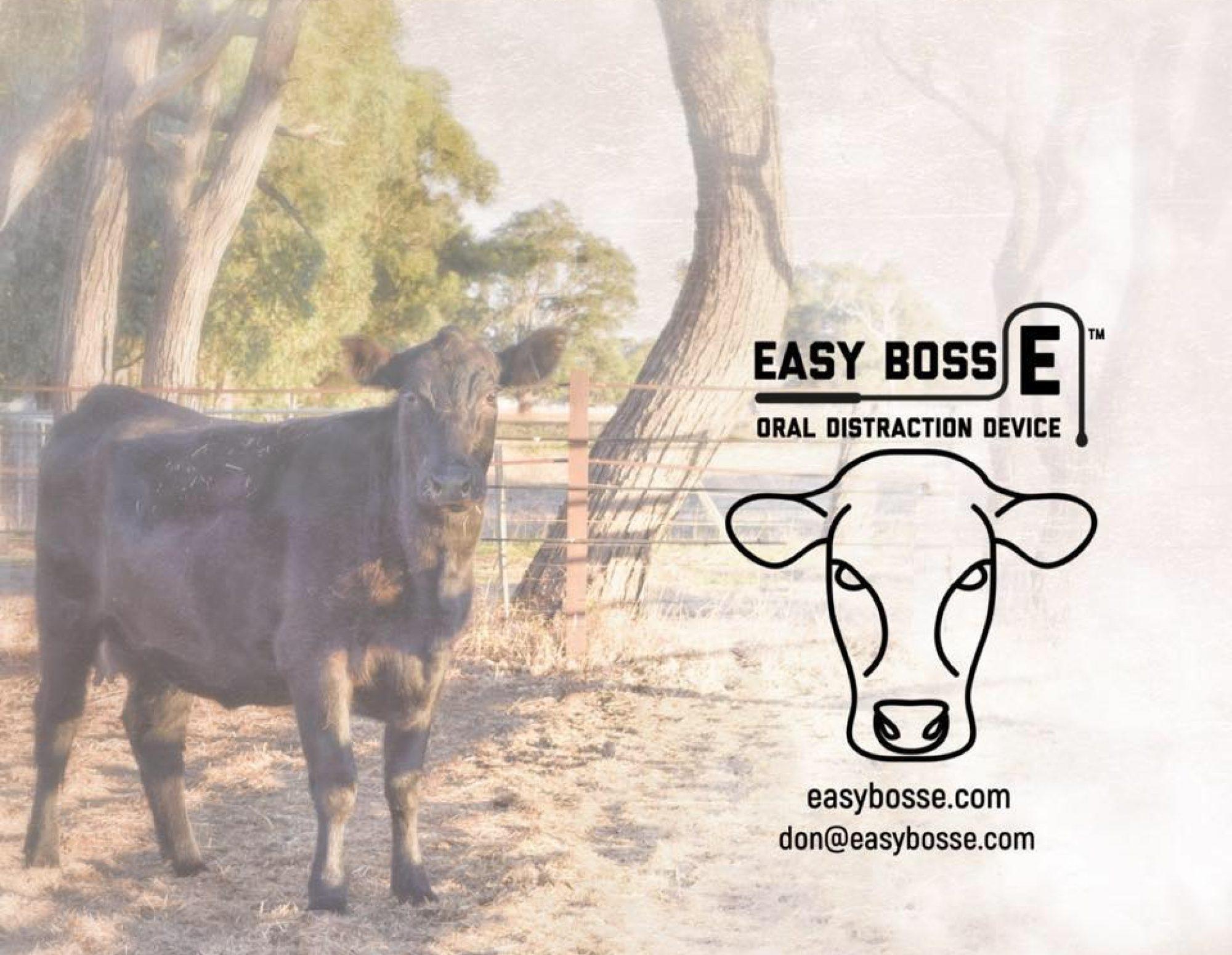 Easy Boss E